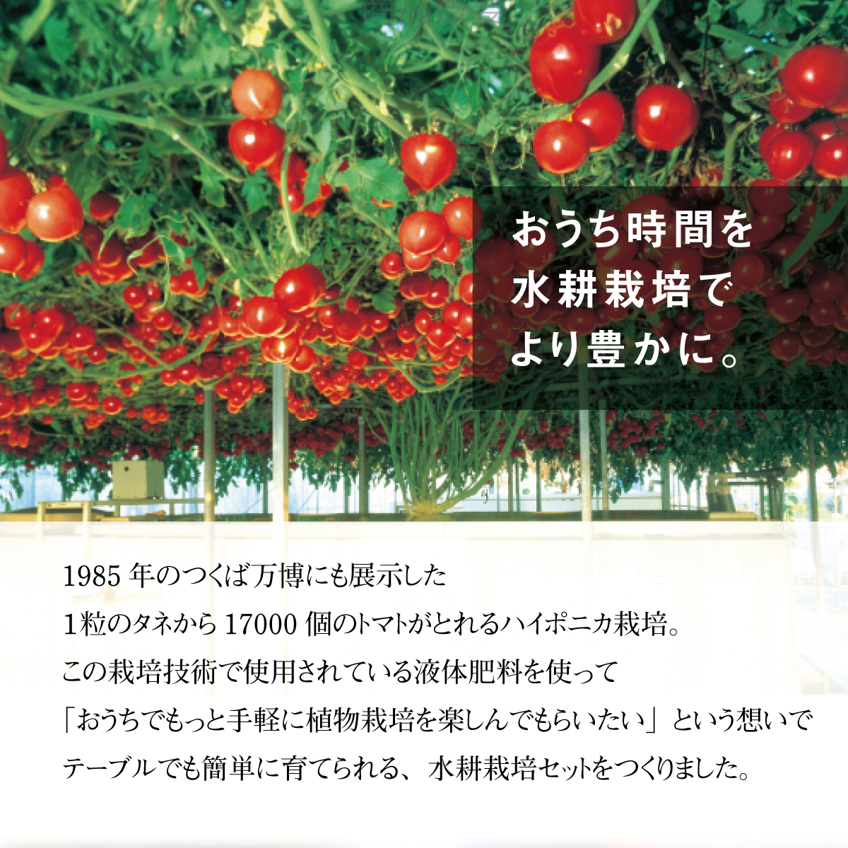 【父の日ギフト】TABLE FARM(テーブルファーム)