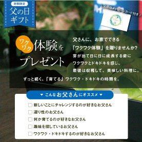 【父の日限定・送料無料】cocochi saien (ここちさいえん) ティールブルー+種セット