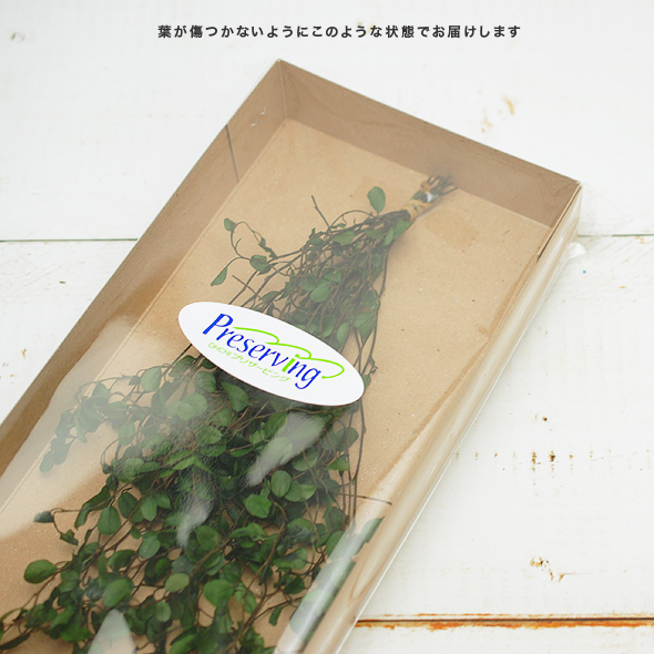 ワイヤープランツ・ショート(プリザーブドフラワー) 箱売りNo.83