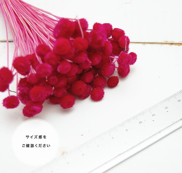 アマレリーノ(ドライフラワー) 花材No.86