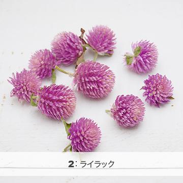 千日紅 センニチコウヘッド(ドライフラワー) 小分け花材No.1