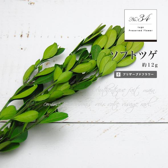 ソフトツゲ(プリザーブドフラワー) 小分け花材No.34