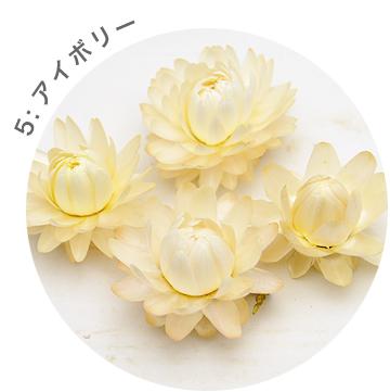 ヘリクリサムヘッド(ドライフラワー)貝細工・カイザイク・カイガラソウ 小分け花材No.6