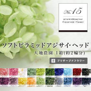 ソフトピラミッドアジサイ・ヘッド(プリザーブドフラワー) 箱売りNo.15