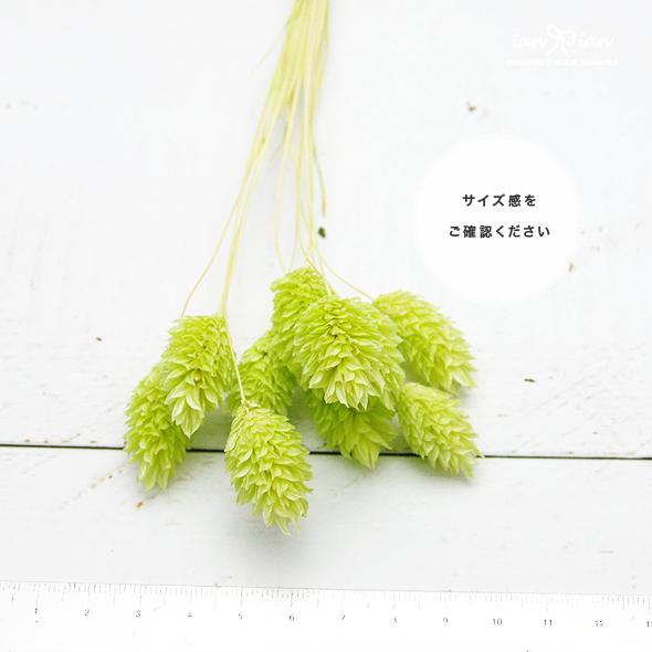 ポアプランツ(ドライフラワー)ファラリス 小分け花材No.36