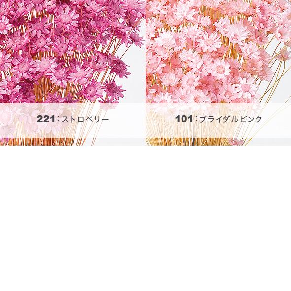 スターフラワー(ドライフラワー) 小分け花材No.35
