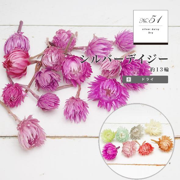 シルバーデイジー・ヘッド(ドライフラワー) 小分け花材No.51