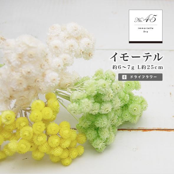 イモーテル(ドライフラワー) 小分け花材No.45