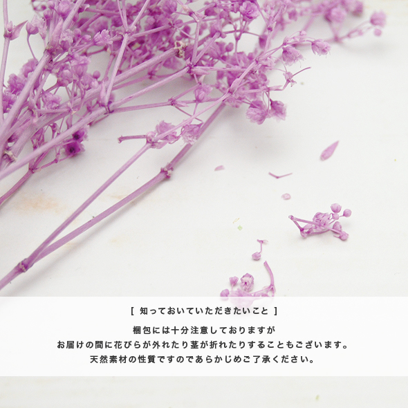 カスミ草・ミリオンスター(プリザーブドフラワー) 小分け花材No.63