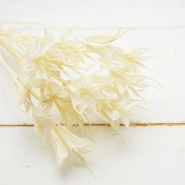 ニゲラオリエンタリス(ドライフラワー) 小分け花材No.46