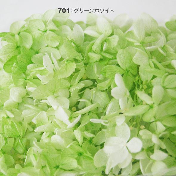 ソフトピラミッドアジサイ・スフレ(プリザーブドフラワー) 箱売り花材No.53