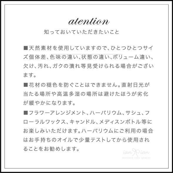 ファラリスIII(ドライフラワー) 花材No.66