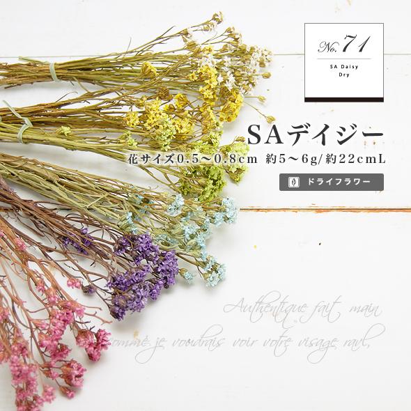 SAデイジー(ドライフラワー) 小分け花材No.71