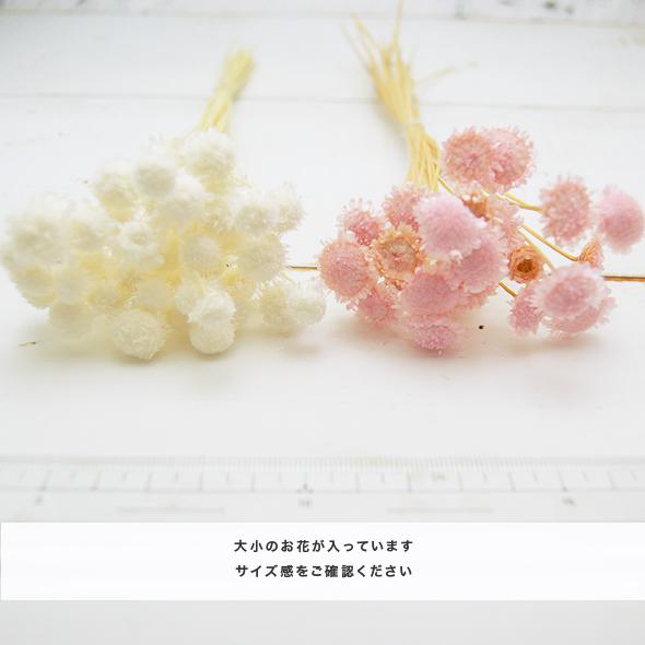 マルガリータ・グランデ(ドライフラワー) 小分け花材No.75