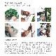 TOKAヤマモミジ株立 RED FST 180cm【受注生産 代金引換不可 日・祝・時間指定不可】【送料区分:2】