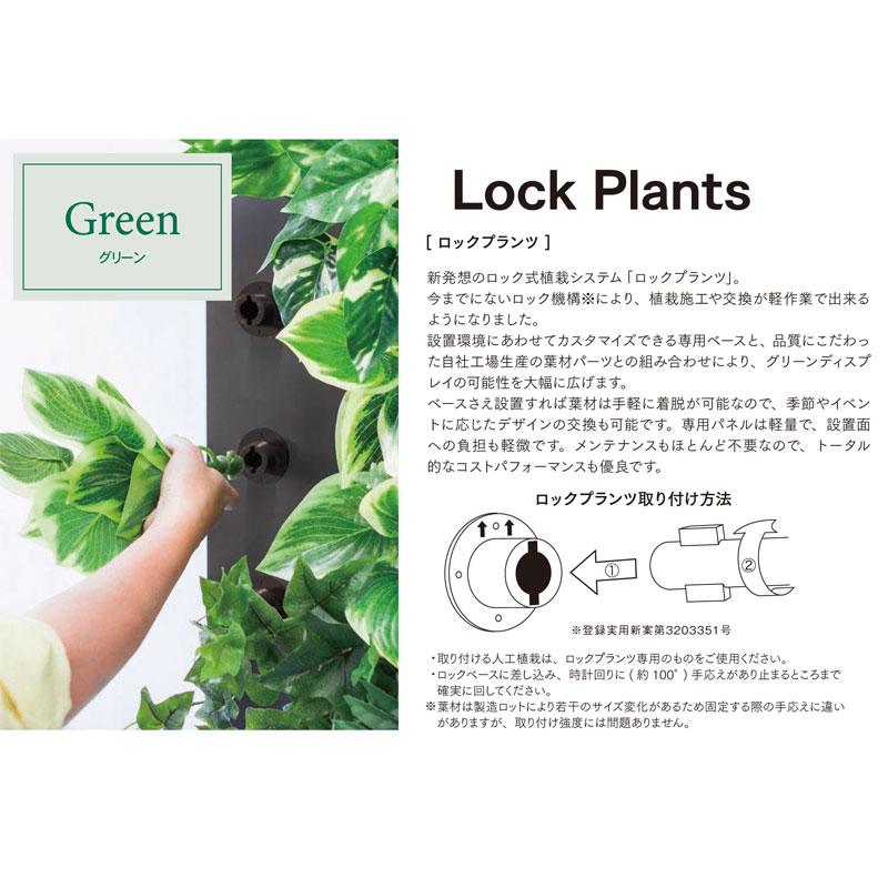 ロックプランツ レザーファーン【送料区分:1】