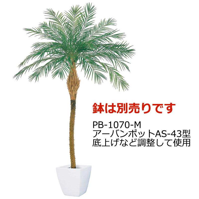 プレミアムフェニックスパームツリー (M) 【代金引換不可】【送料区分:3】