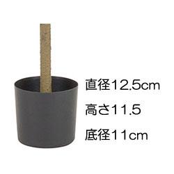 ローレルツリー【代金引換不可】【送料区分:3】