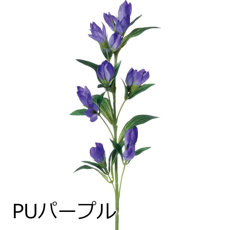 リンドウ【送料区分:1】