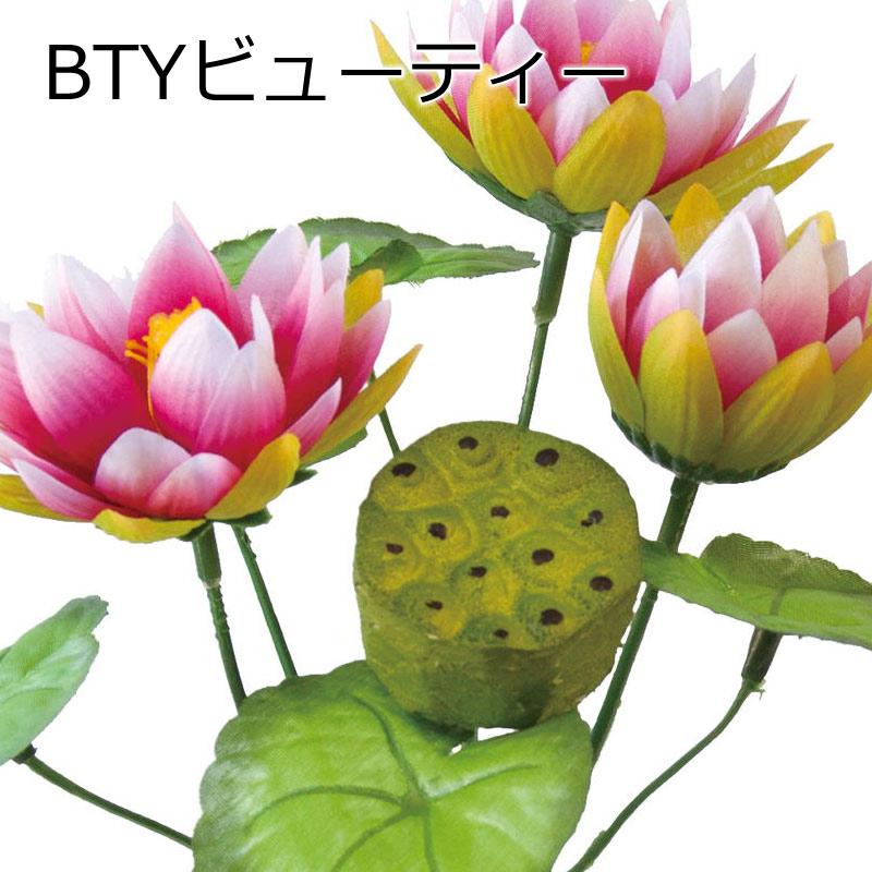 ロータスブッシュ【送料区分:1】