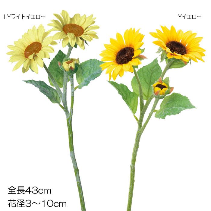 サテンヒマワリ×3【送料区分:1】