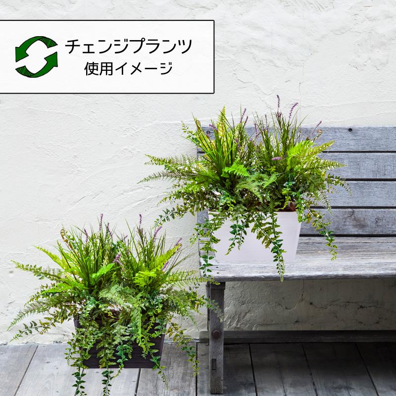 屋外OK チェンジプランツ ラベンダーリーフミックスセット【送料区分:1】