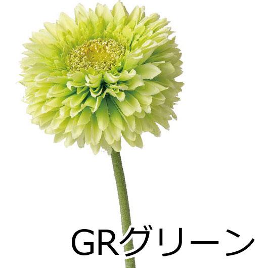 ポンポンガーベラ【送料区分:1】