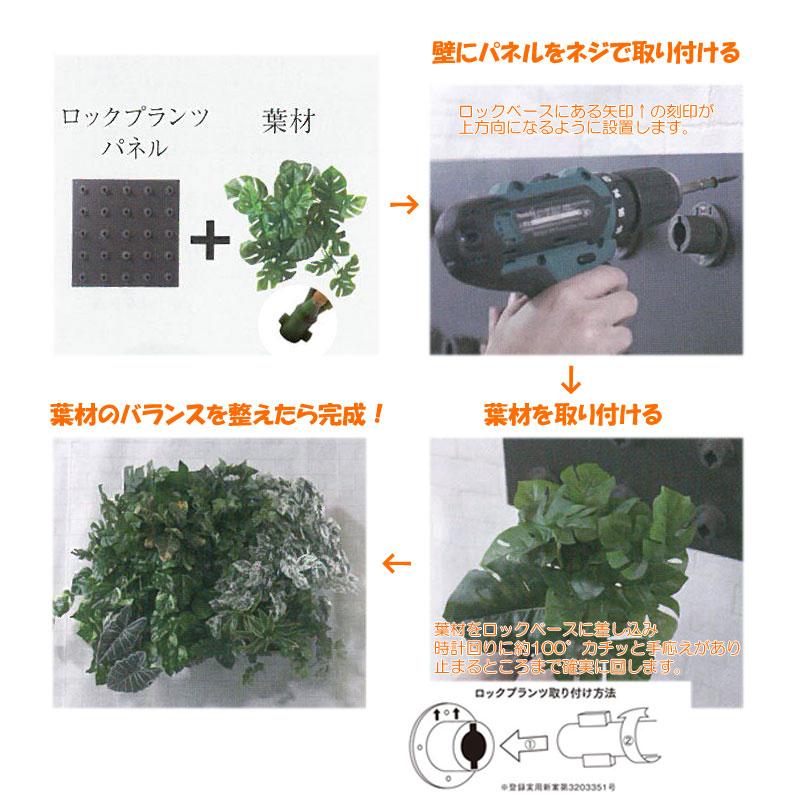 ロックプランツ ヒメモンステラ【送料区分:1】