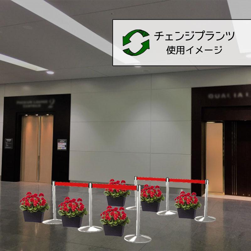 チェンジプランツ プレミアムゼラニウムセット【送料区分:1】