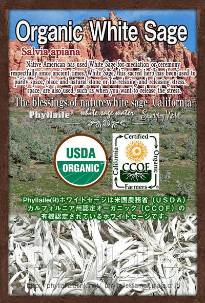 Phyllaile ホワイトセージ クラスター15g USDAオーガニック認証