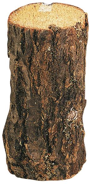 朽ち木(産卵木)