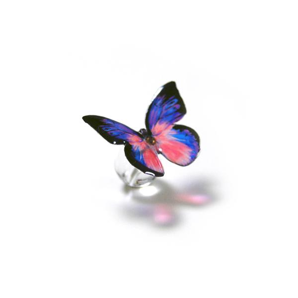 吸水をする蝶のピアス・シロチョウ系