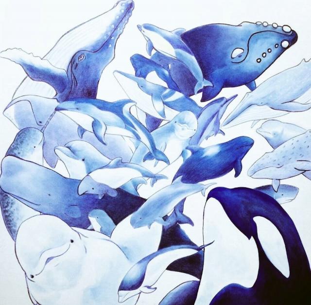 イルカとクジラのふろしき