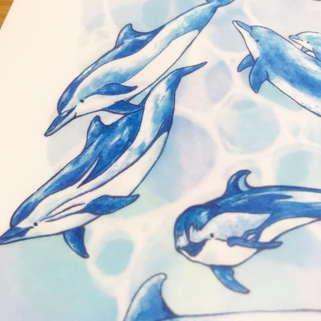 イルカのクリアファイル