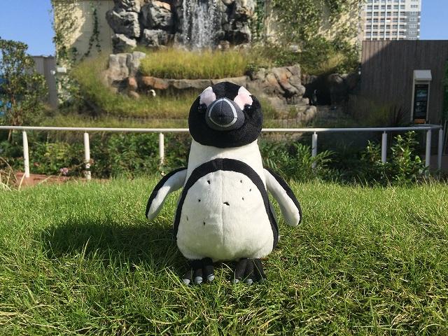 【サンシャイン水族館オリジナル】ケープペンギンぬいぐるみ
