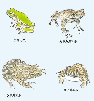 本州の蛙2・クリアファイル