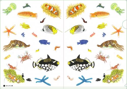 サンゴ礁の生き物・クリアファイル
