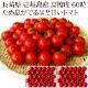 【K】壱岐のたから 長崎県 壱岐産 高糖度 フルティカ トマト ママなかせ 高級 ギフトセット 60 粒