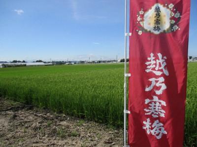 【ご予約】越乃寒梅 特別本醸造 「亀田郷大江山産2020」 1800ml