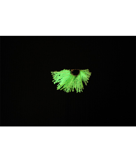 Neon Flower Ear Clip[bsdYG20SS-01]【2020SS】