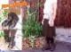 【INCHOLJE-インコルジェ-】くしゅくしゅラクチンブーツ2☆本革☆日本製☆No.8209【甲高・幅広・外反母趾さん必見!】