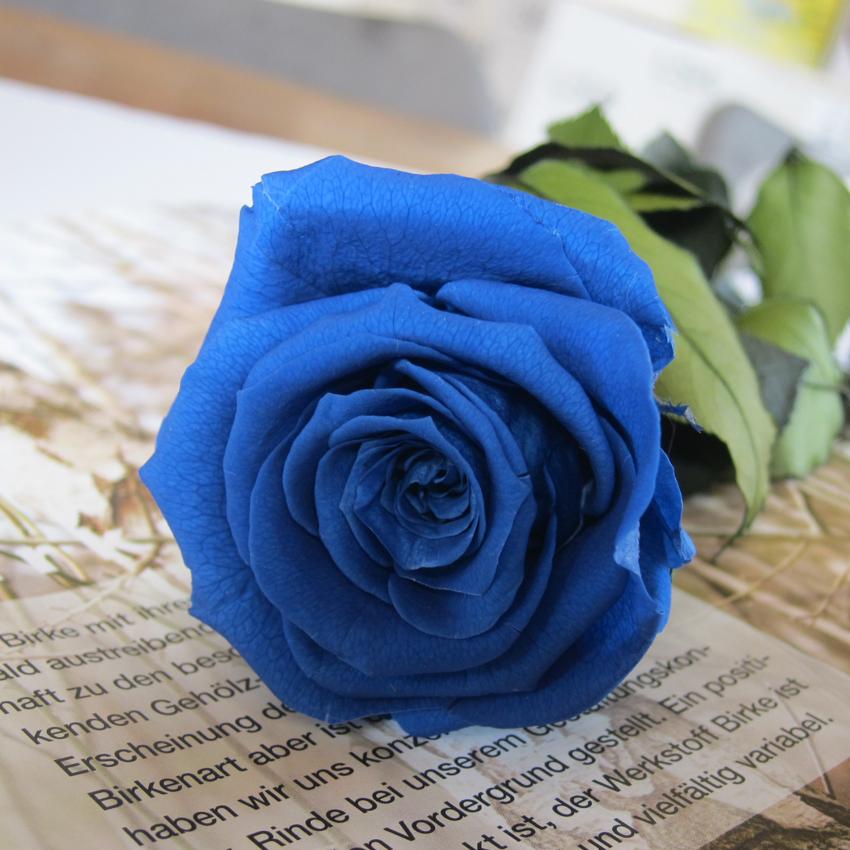 【フラワーセット】ステムローズ(ブルー)+ruhruソースパン (16cm x 8.5cm ガラス蓋付き IH&直火用)