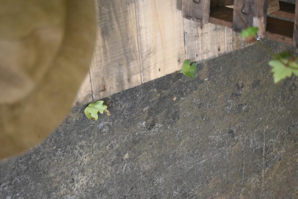 105050 ヴィンテージ 「Lmper cork」  ハット MADE IN FRANCE