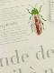 【予約商品】OTONA Encyclopedie エコレザー ハーネス blanche【9月下旬発送予定】