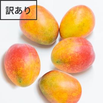 【期間限定】格安アップルマンゴー2�(形や大きさの不揃いな規格外マンゴー)発送時期は7月1日〜8月15日