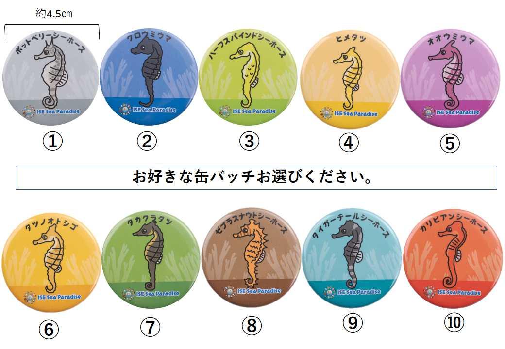 【大黒物産】タツノオトシゴ文房具4点セット