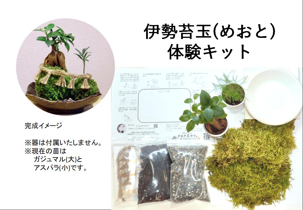 【体験キット】伊勢苔玉(めおと)