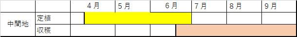 【送料無料・即出荷】実割れしにくいすずなりトマトの苗(赤ミニトマト)【9cmポット自根苗/お買い得4個セット】野菜苗 ミニトマト苗 みにとまと苗 プチトマト苗 家庭菜園 ガーデニング ベランダ 露地栽培 簡単栽培 鉢植え プランター tomato 多収穫 送料無料