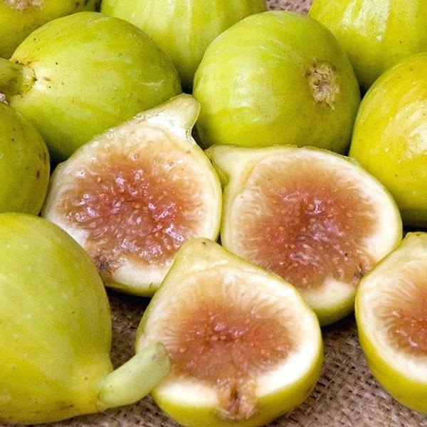ミニイチジク カドタ【果樹苗9cmポット/2個セット】夏秋果兼用種の無花果。小さめの実で皮付きのままツルっと食べれる、味も香りも良い品種!!生食に生食に加え、ジャムやドライフルーツに最適の品種。簡単に栽培出来て収穫出来るので家庭菜園の中でも人気!!