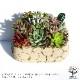 【送料無料】多肉植物 寄せ植え Old stone wall L(古い石垣L)【多肉植物 サイズイメージ:高さ約21cm×幅約23cm×奥行約13cm  /1個売り】多肉植物 寄せ植え メルヘン ヨーロッパ ドイツ オールドハウス リース